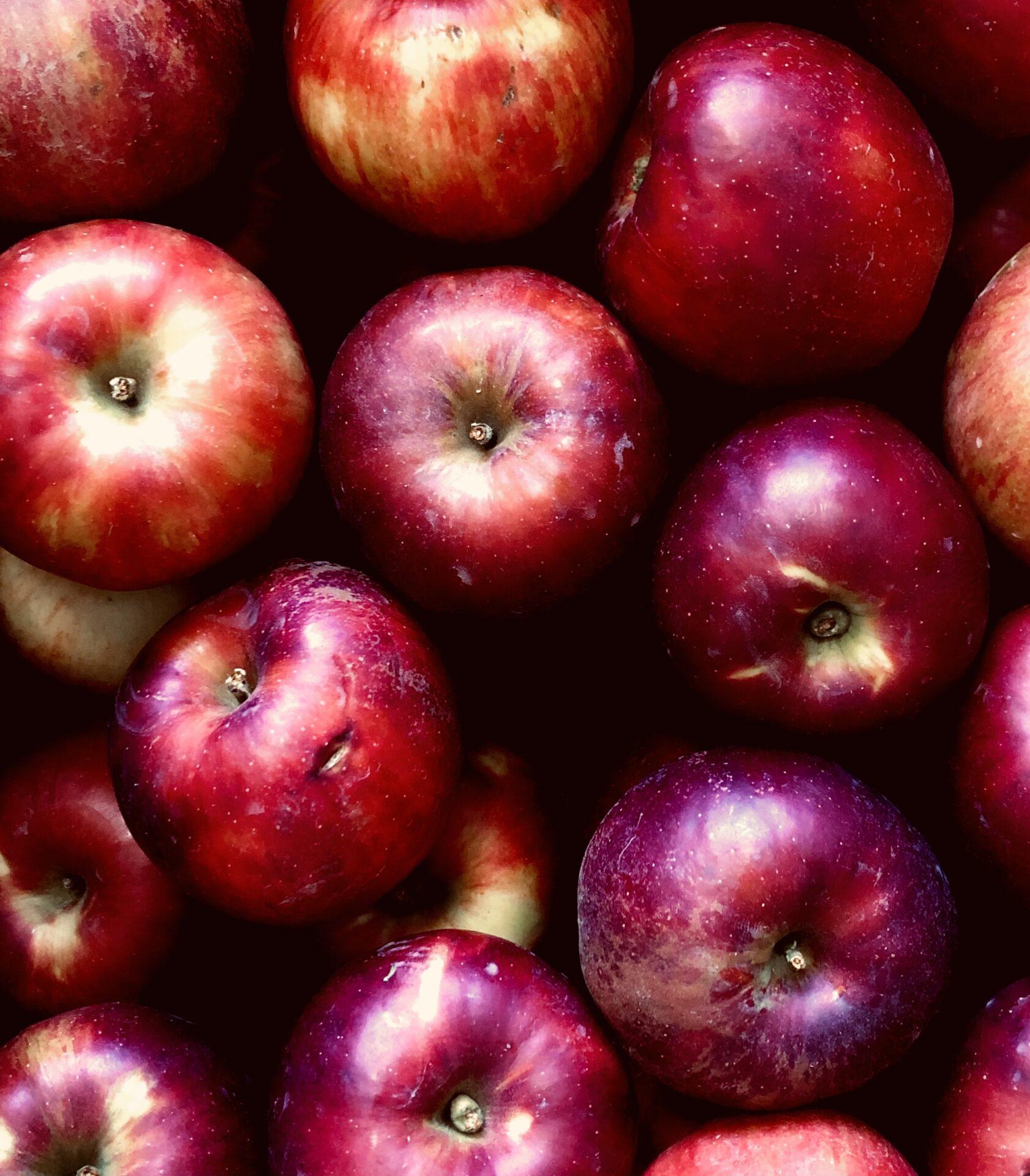 りんご 〜友清りんご園〜 10月から